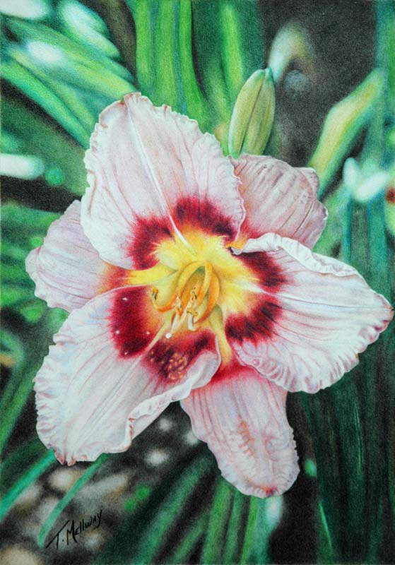 Pastel Daylily Final