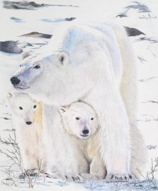 """Polar Bears"" (Photo courtesy of WFP) Colored Pencil 8.5 x 11 - SOLD"