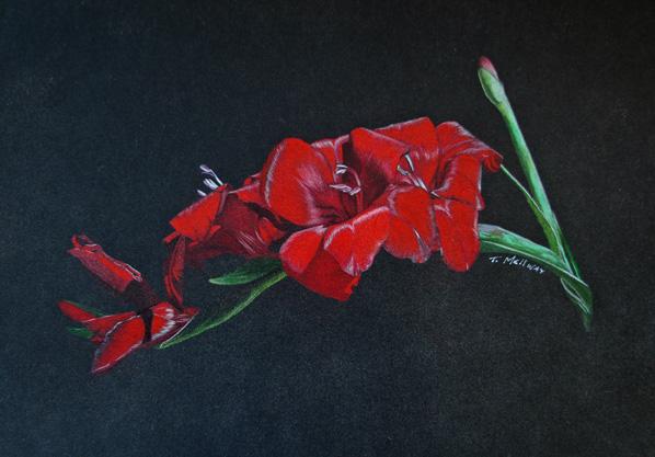 Red Glads on Black