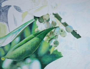 Mistletoe_4