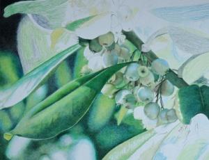 Mistletoe_5b