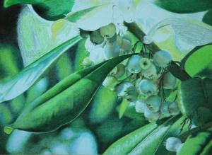 Mistletoe_6
