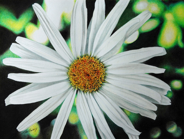 """4th Place Winner in the International Contemporary Art Competition - """"Shasta Daisy"""" 8.5 x 11 Colored Pencil on Bristol Vellum"""