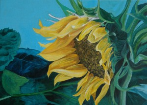 A_Sunflower1