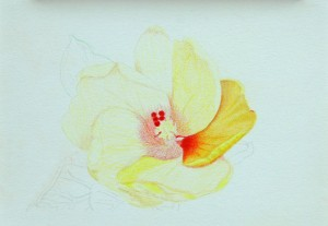 Yellow_Flower_Blending_Layers