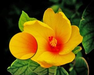 Yellow_Flower_Cutaway Detail