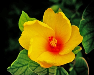 Yellow_Flower_More_Values