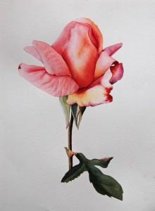 Birthday Rose_2