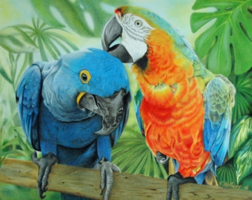 """Birds of a Feather"" 11 x 14 Colored Pencil - SOLD"