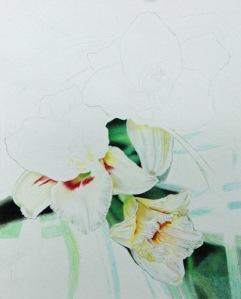 White Daylilies2