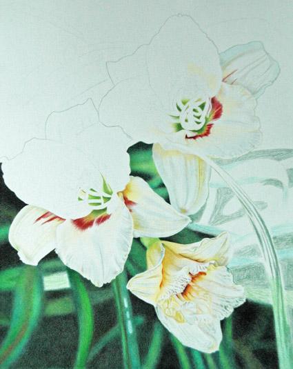White Daylilies_4