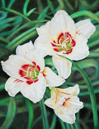 """White Lilies""Coloured Pencil 11 x 14 on Bristol Vellum"