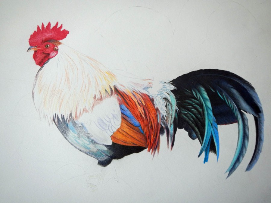 rooster3wip72