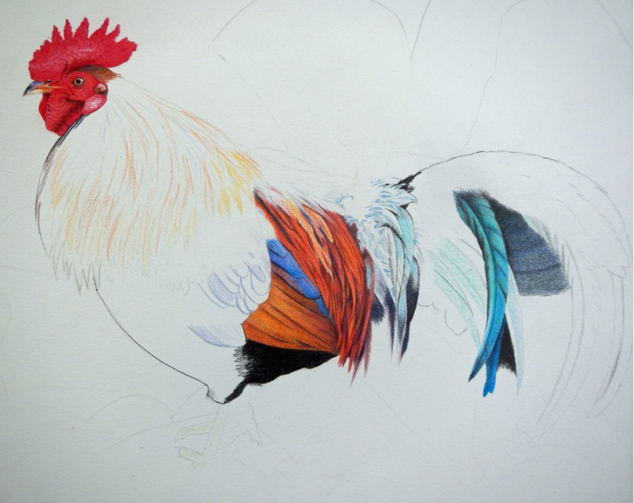 rooster72wip1