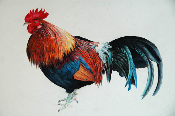 rooster_4