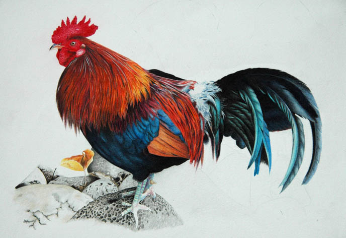 rooster_5