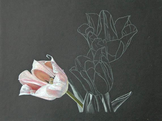 Tulip Trio_1