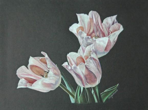 """Tulip Trio"" 8 x 10 Coloured Pencil on Black Artagain"