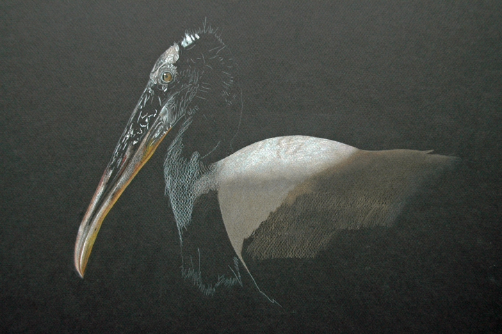 Wood Stork_1