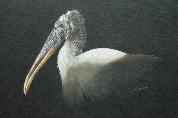 """Woodstork"" 16 x 20 Coloured Pencil - SOLD"